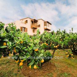 Luxus Villa La Orotava. Orangenbaum